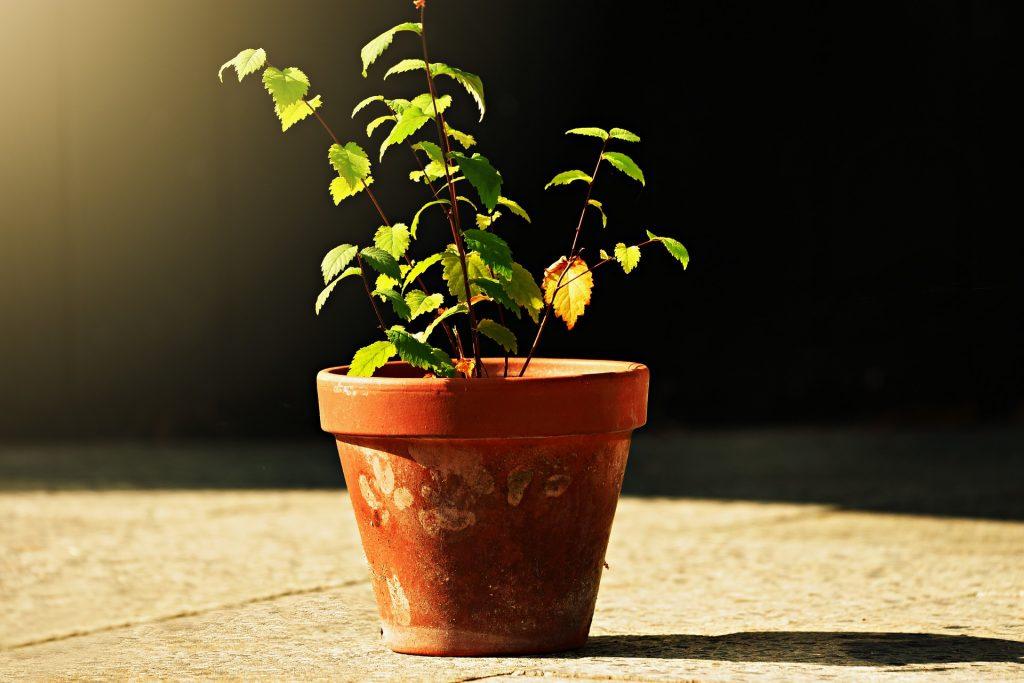 Erde wechseln bei Pflanzen auf meinegeschichten.de